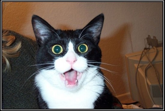gato-flipando
